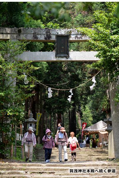賀茂神社本殿へ続く参道